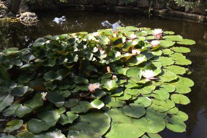Alan Yaratmak, Sukha, Alan Açmak ve Shunya – 4